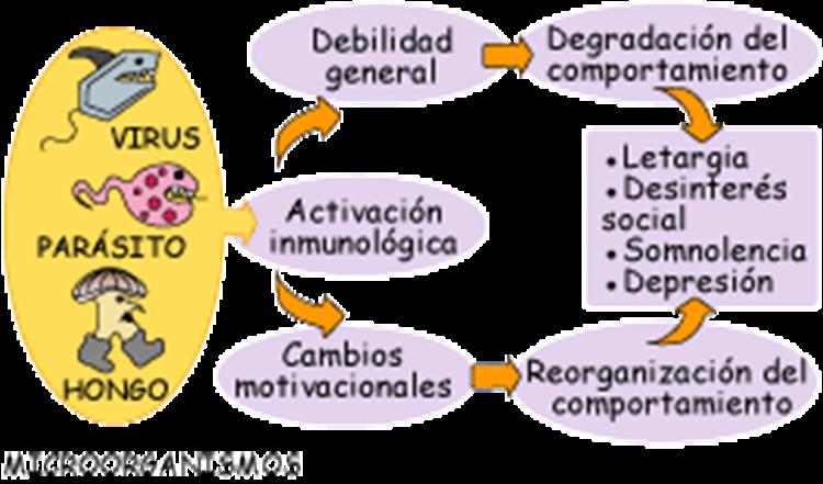 estres-sistema-inmune
