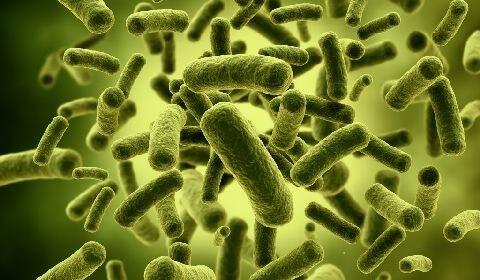 Estimular inmunidad. Probióticos