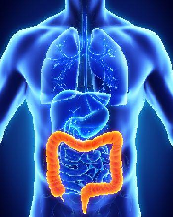 Ilustración anatomía de colon